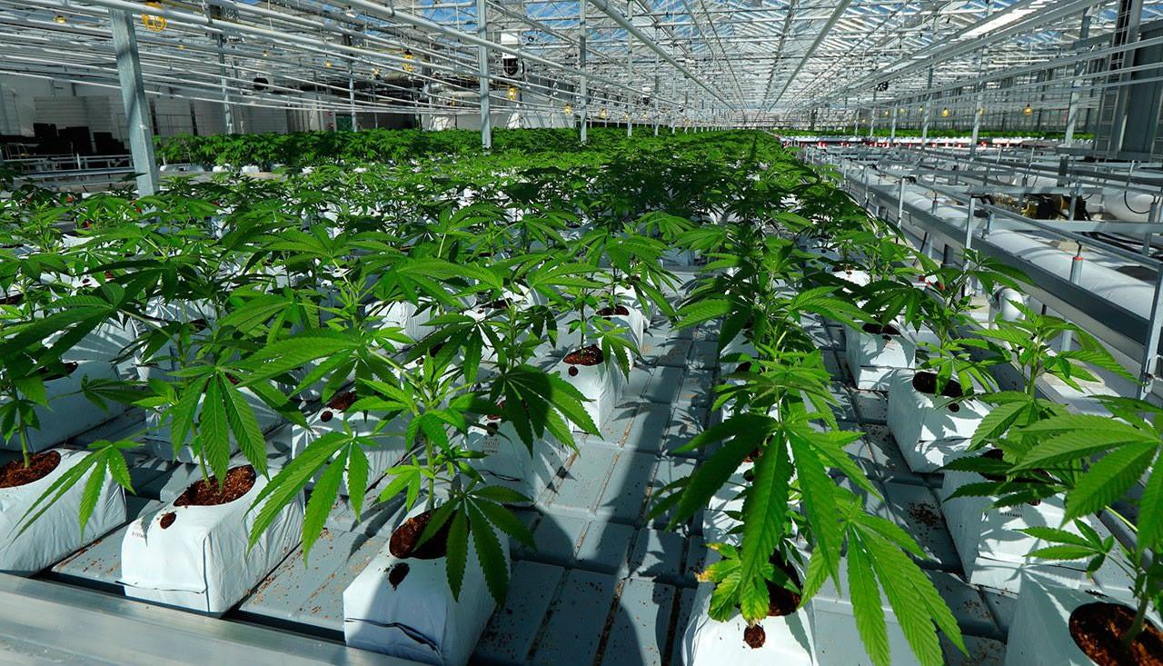 San Diego creates new marijuana business regulatory agency