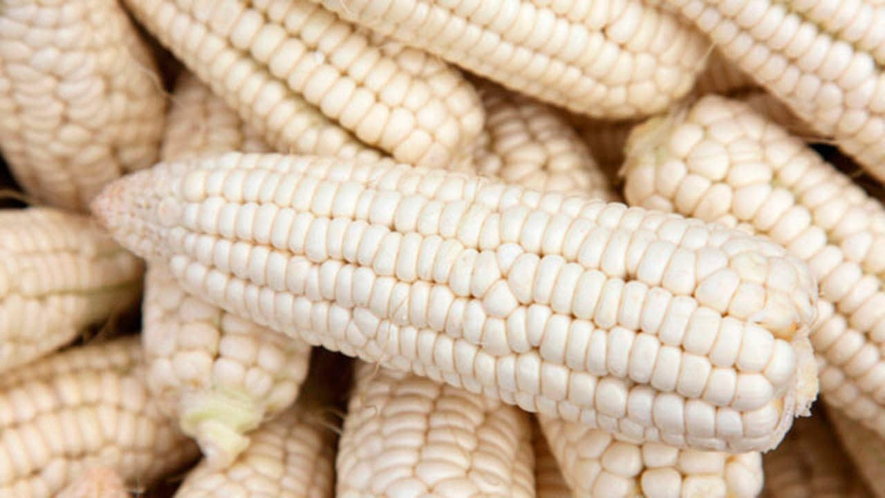Gruma seeks to reduce white corn imports