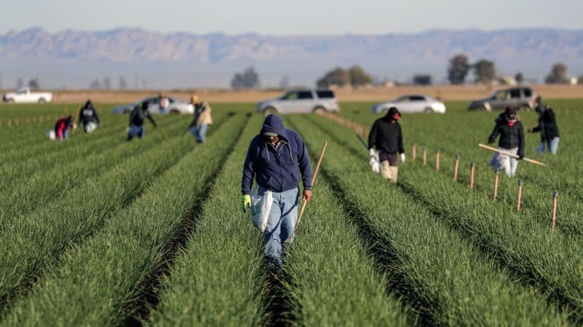 California agriculture industry could lose US$8.6 billion due to coronavirus pandemic