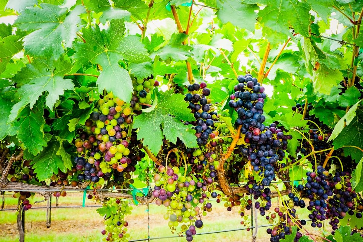 Texas wineries call on Governor Abbott to relax operating restrictions