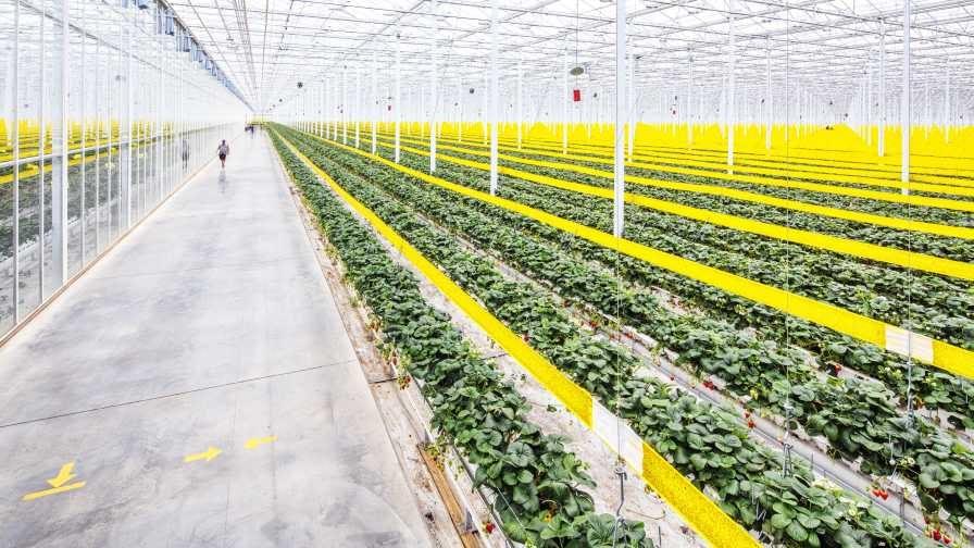 Mastronardi Produce opens operations center in Laredo, Texas