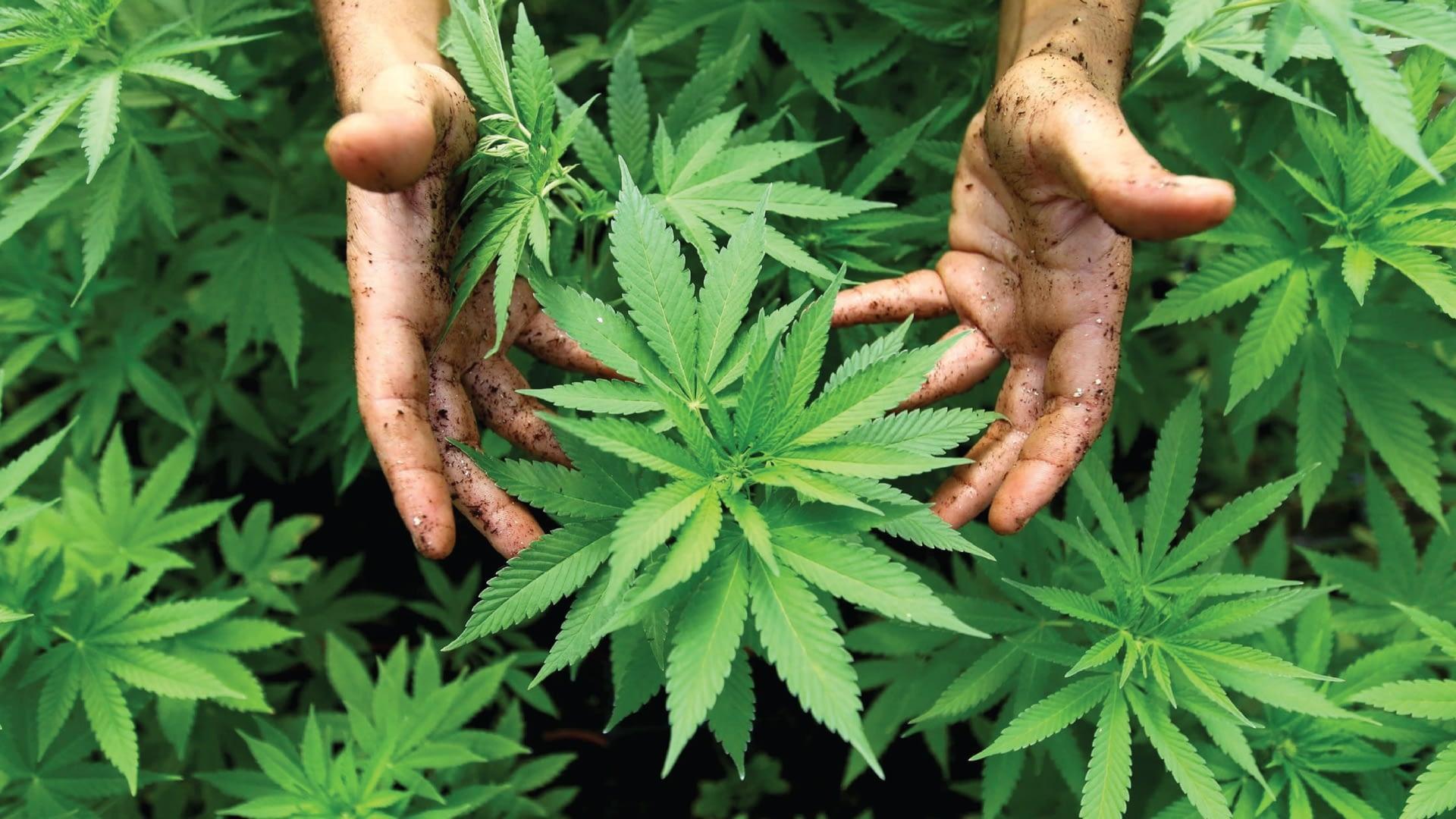 Mexico Legalizes Recreational Pot