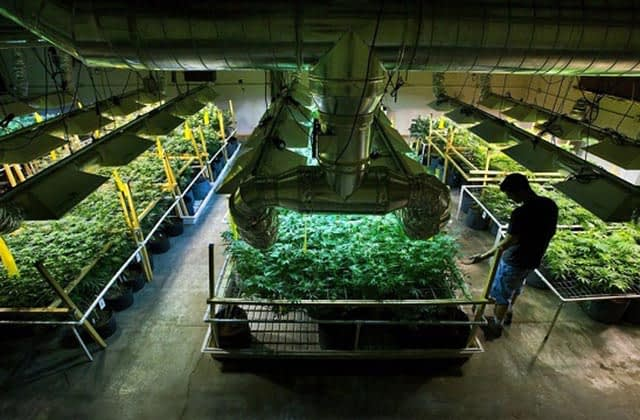 New Mexico medical marijuana industry booming during pandemic